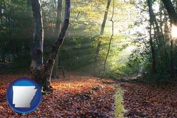 sunbeams in a beech forest - with Arkansas icon