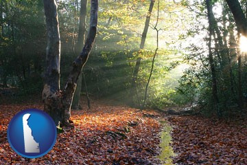 sunbeams in a beech forest - with Delaware icon