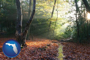 sunbeams in a beech forest - with Florida icon