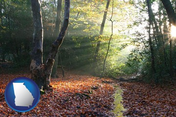 sunbeams in a beech forest - with Georgia icon