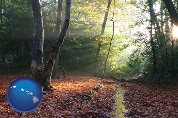 sunbeams in a beech forest - with Hawaii icon