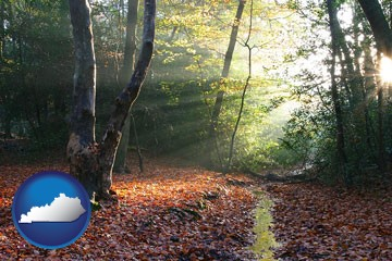 sunbeams in a beech forest - with Kentucky icon