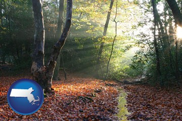 sunbeams in a beech forest - with Massachusetts icon