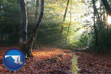 sunbeams in a beech forest - with Maryland icon