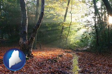 sunbeams in a beech forest - with Maine icon