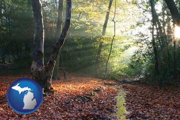sunbeams in a beech forest - with Michigan icon