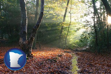 sunbeams in a beech forest - with Minnesota icon