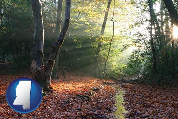 sunbeams in a beech forest - with Mississippi icon