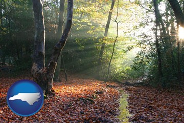 sunbeams in a beech forest - with North Carolina icon