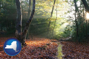 sunbeams in a beech forest - with New York icon