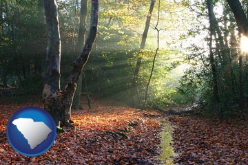 sunbeams in a beech forest - with South Carolina icon