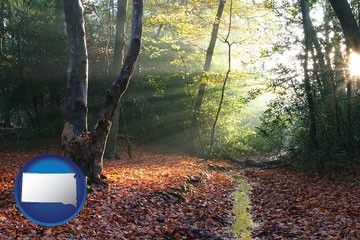 sunbeams in a beech forest - with South Dakota icon