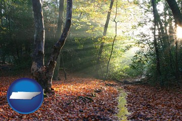 sunbeams in a beech forest - with Tennessee icon